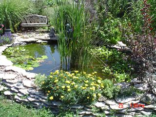 Keokuk cabin photo - My pond. Taken by Aimee (one of my guests)