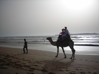 camel riding on the beach