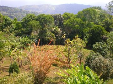 From the Patio Towards the Mountains, Fruit Trees, and Pineapples