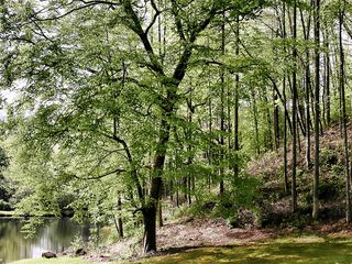 Robbinsville farmhouse photo - Beech Tree next to Pond