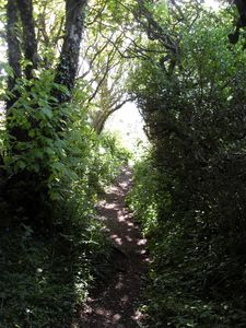 Walk to Sancreed Holy Well