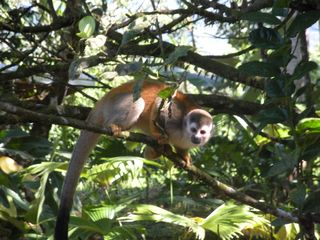 Quepos cabin photo - Enjoy Exotic Animals (monkeys,tucans,birds and butterflies) from your own Cabin