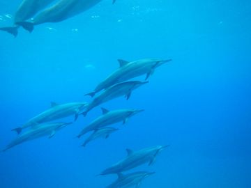 ...or simply frolic with spinner Dolphins at beaches only a few min away