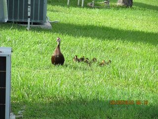 New Port Richey mobile home photo - Local Wildlife