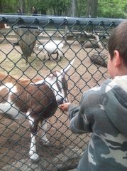 Wildwood condo photo - Feeding the goats at the Cape May Zoo!