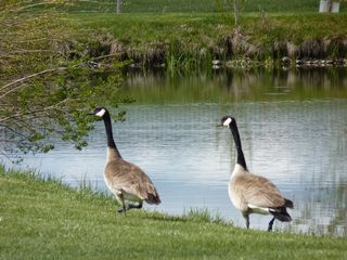 Bozeman house photo - Gertrude and Heathcliff at pond