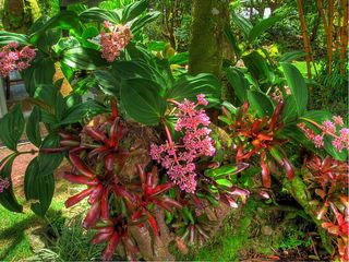 Hilo bungalow photo - Bromeliads, orchids and more colorful splendor abound in the enchanting gardens