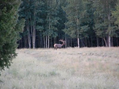Bull elk in meadow near Mountain Home