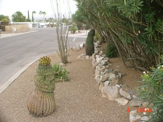 Green Valley mobile home photo - Full mature desert landscaping with natural privacy for front entrance