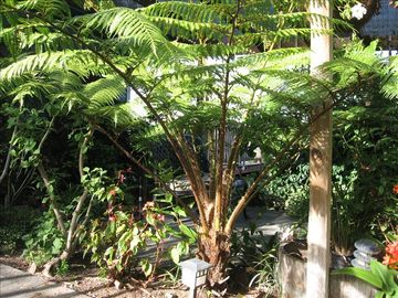 Our tropical back garden