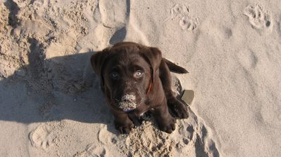 Every puppy loves the beach