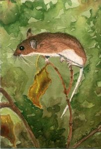 Fall mouse painted at Sherman Creek cabin 2009. Acrylic.