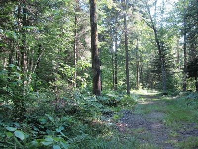 Craftsbury cottage rental - Logging Road