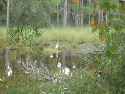 Egret in pond inthe garden,view from pool area