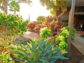 Lahaina condo photo - Gardens in the late afternoon..