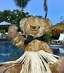 VRBO Bear enjoys the pool