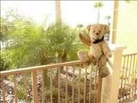 VRBO Bear enjoying the tranquil porch
