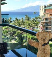 Treat yourself to the comforts of home and the beauty only found in Maui!