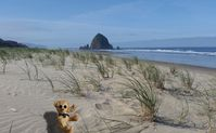 You will enjoy being just steps from the beautiful Oregon coast.