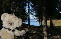 VRBO Bear enjoying the beautiful cove on the private wooded lot.