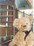 The bear loves the spiral staircase up to the master bedroom loft
