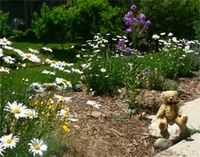 The Bear 'pawses' his busy, fun-filled day to smell the flowers in the backyard