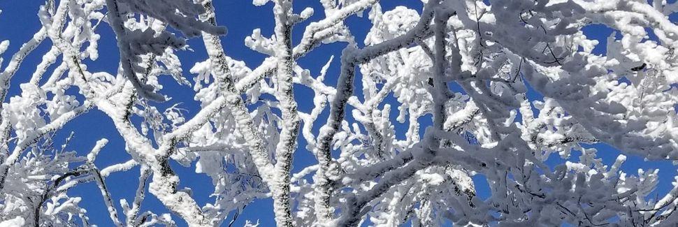 Roan Mountain, TN, USA