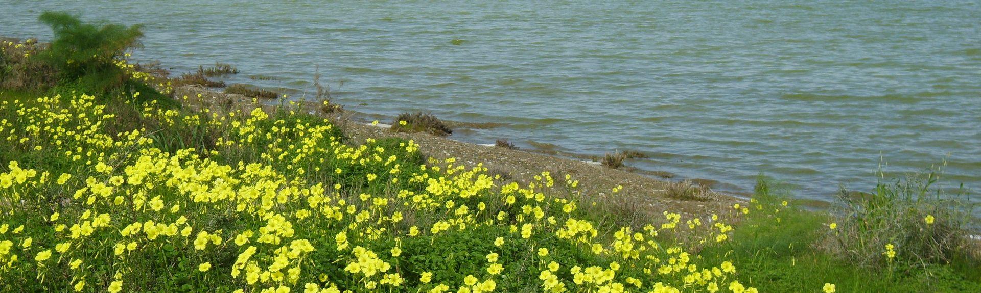 Softades, Cyprus