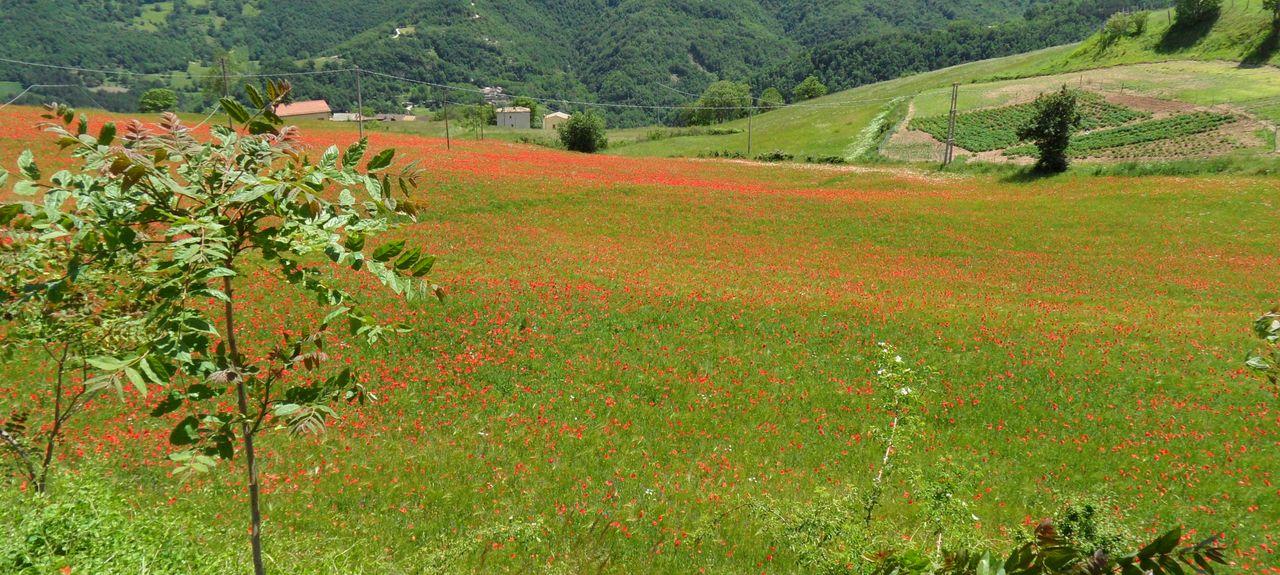 Alba Adriatica, Teramo, Abruzzo, Italy