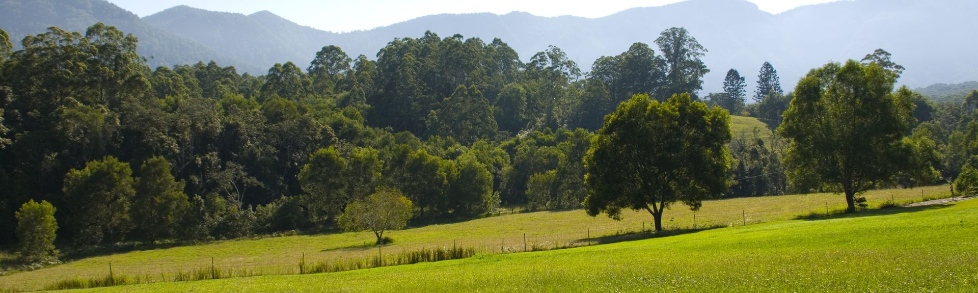Bellingen, New South Wales, Australië