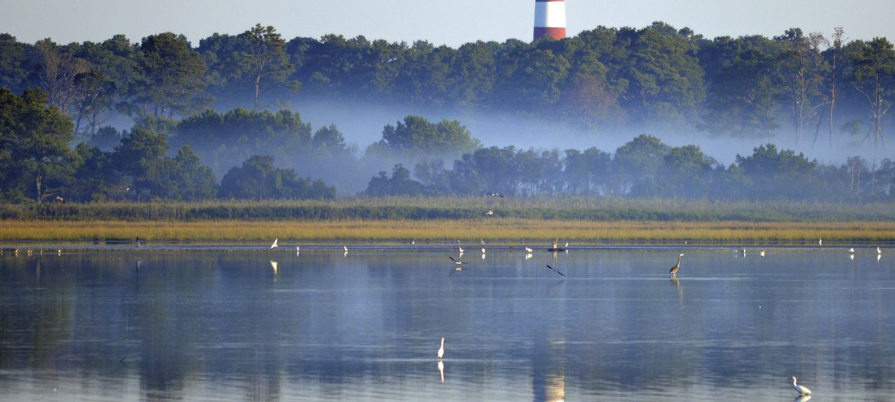 Oyster Bay, Chincoteague Island, Virginia, United States
