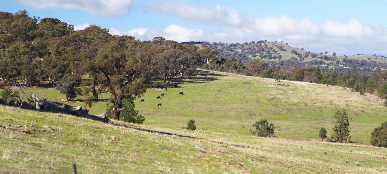 Glenrowan, VIC, Australia