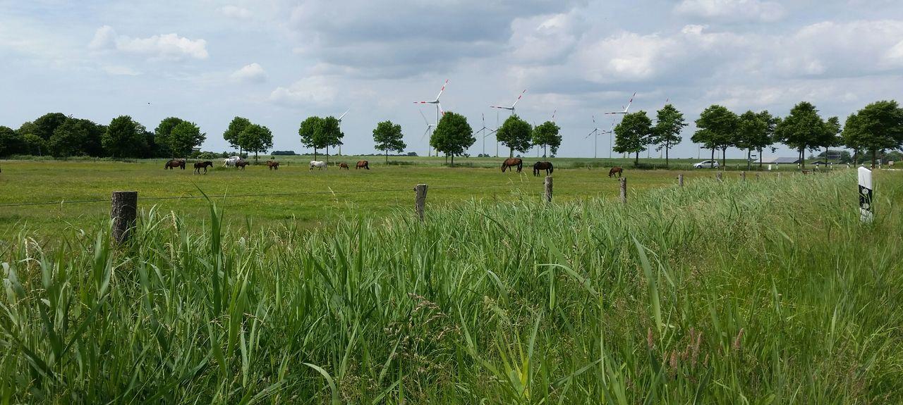 Brunsbüttel, Schleswig-Holstein, Allemagne