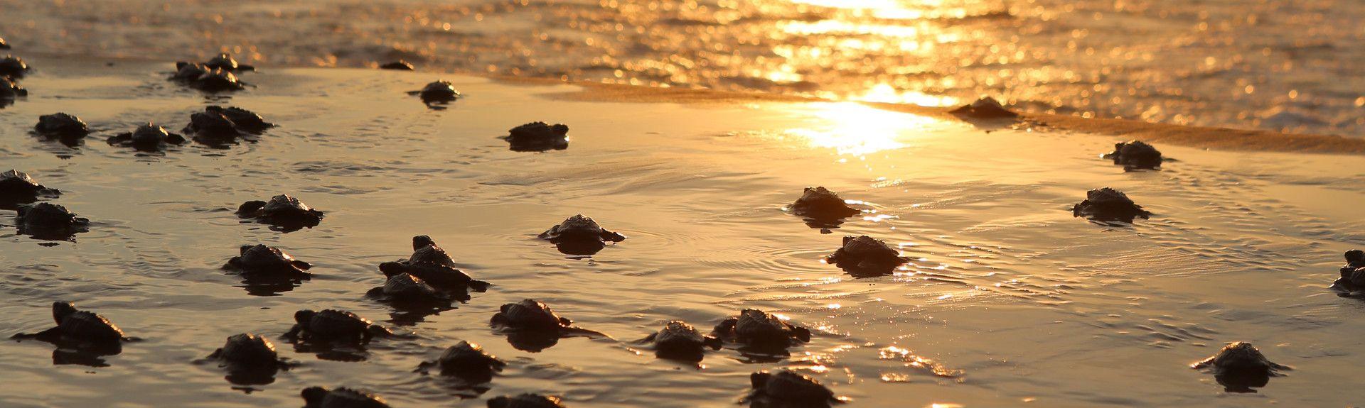 Sea Vista, South Padre Island, Texas, United States of America