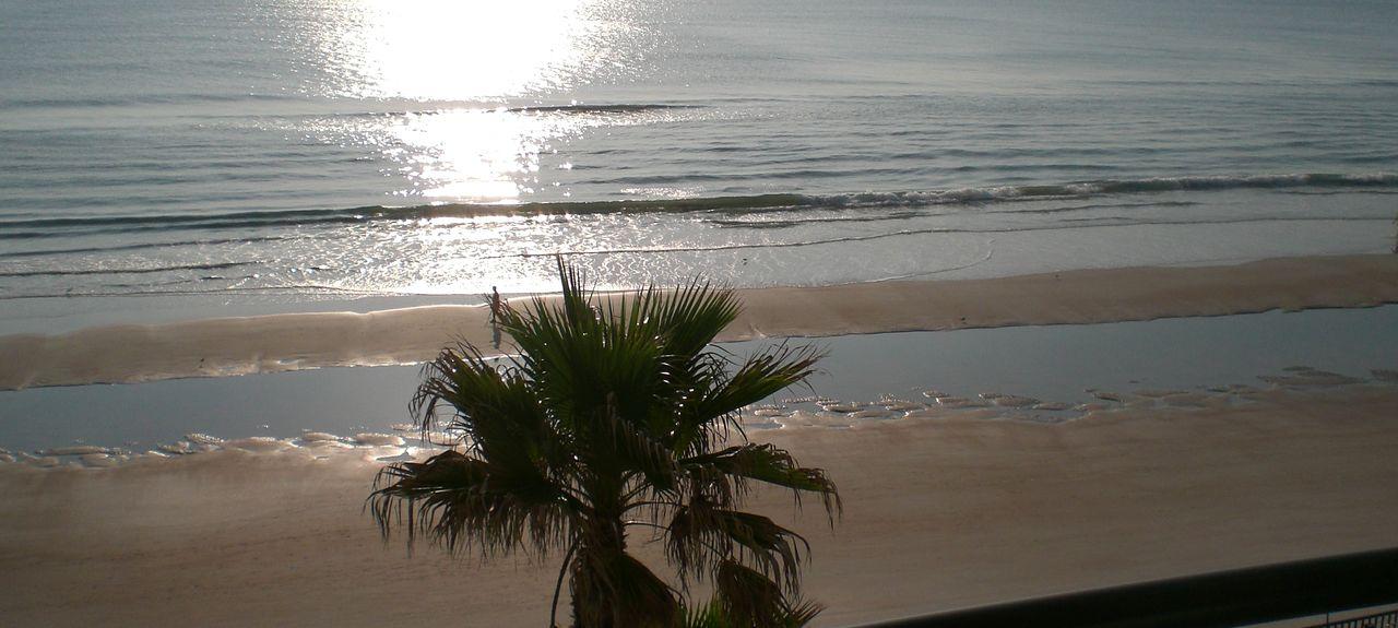Sand Dollar (Daytona Beach Shores, Floride, États-Unis)