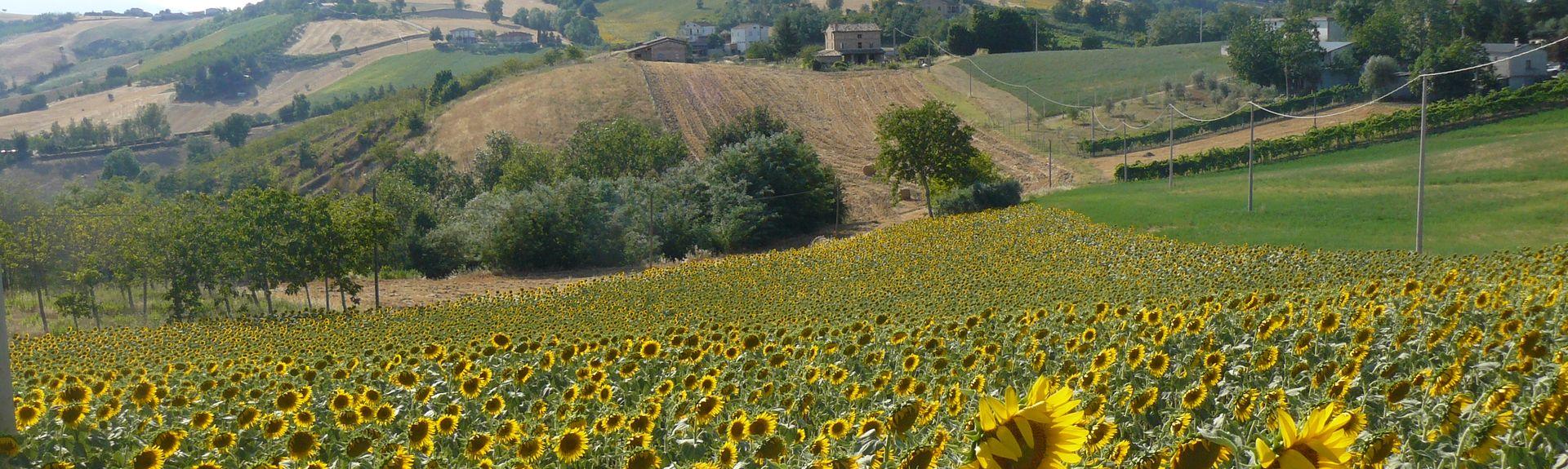 Gualdo, Marche, Italia