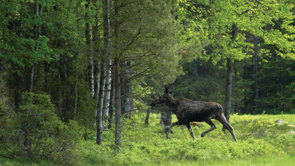 Torsby N, Sweden