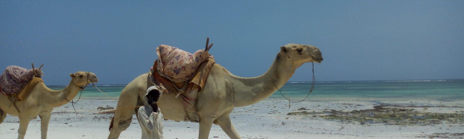 Playa de Chale, Isla de Chale, Condado de Kwale, Kenia