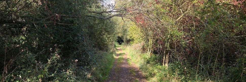 Saffron Walden, Essex, UK