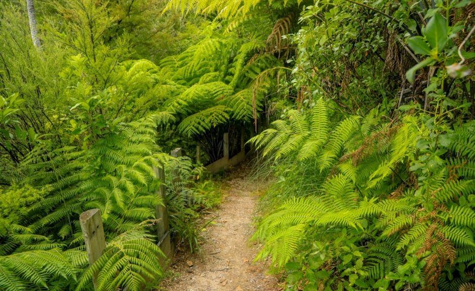 Marahau, Tasman, New Zealand