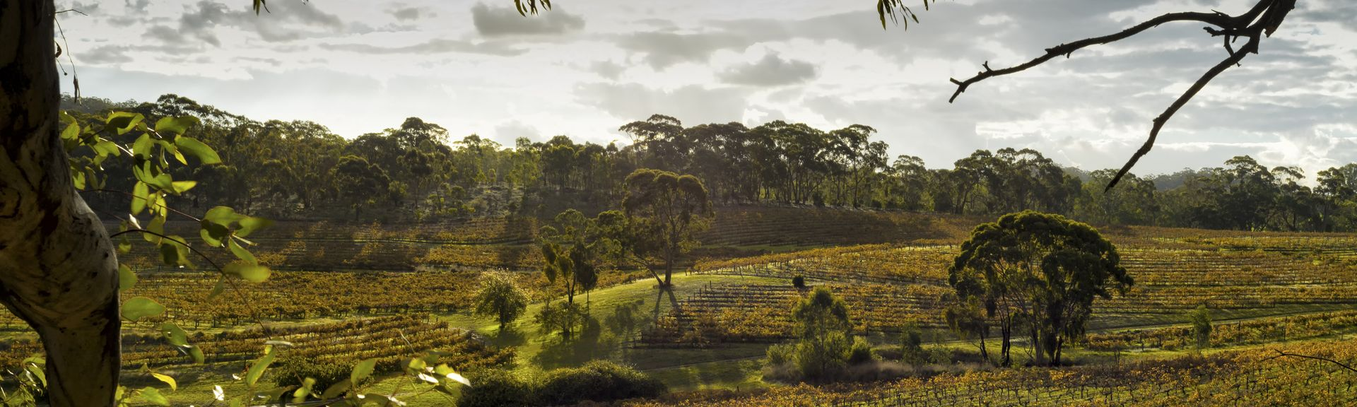 Clare Valley, South Australia, Australia