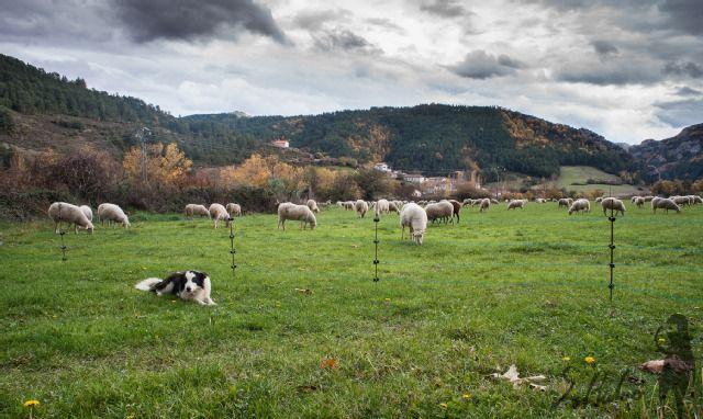 Romanzado, Navarra, Spain