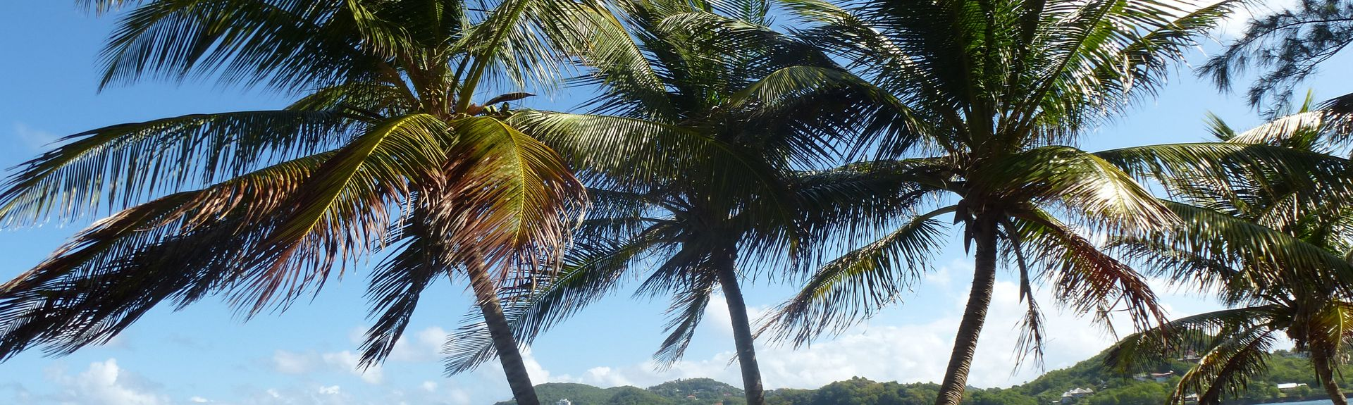 Saline Point, Cap Estate, Sainte-Lucie