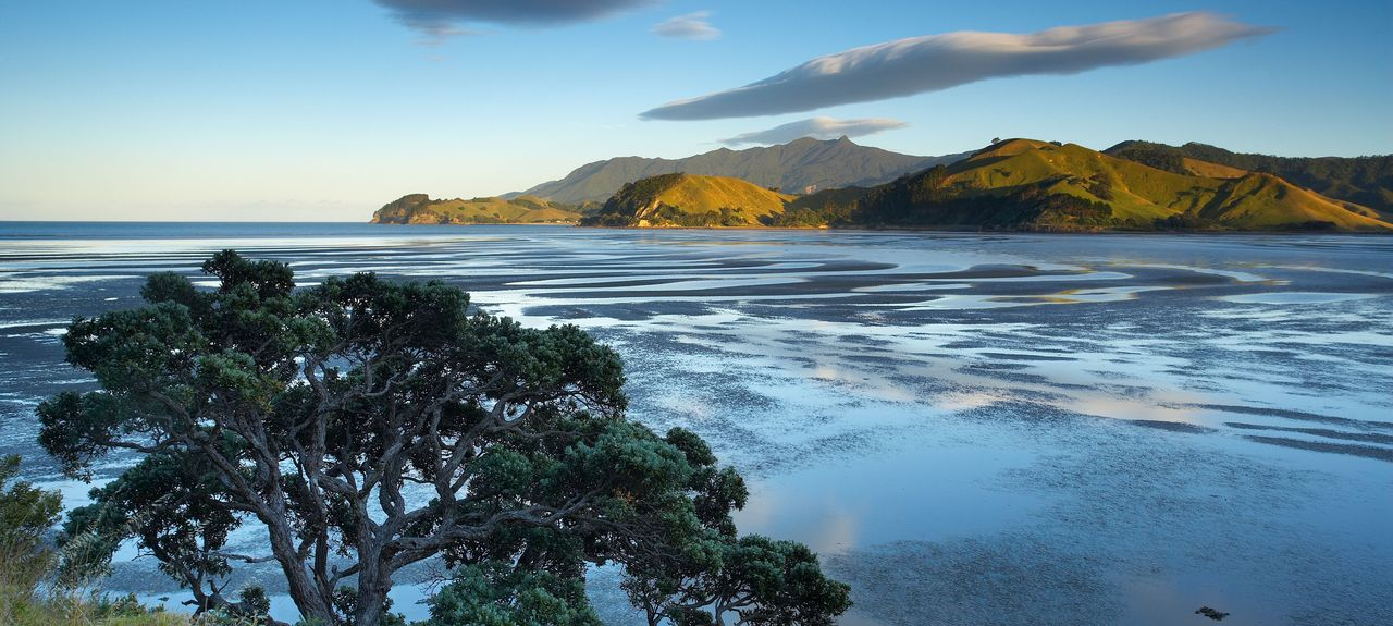 Thames-Coromandel District, Waikato, North Island, New Zealand