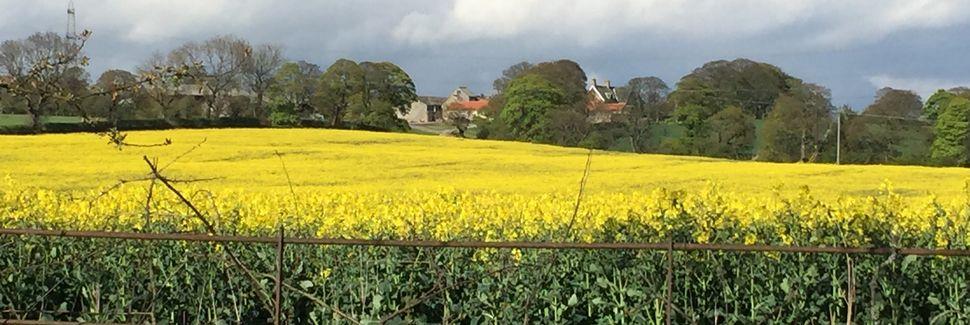 Houghton le Spring, Inglaterra, Reino Unido