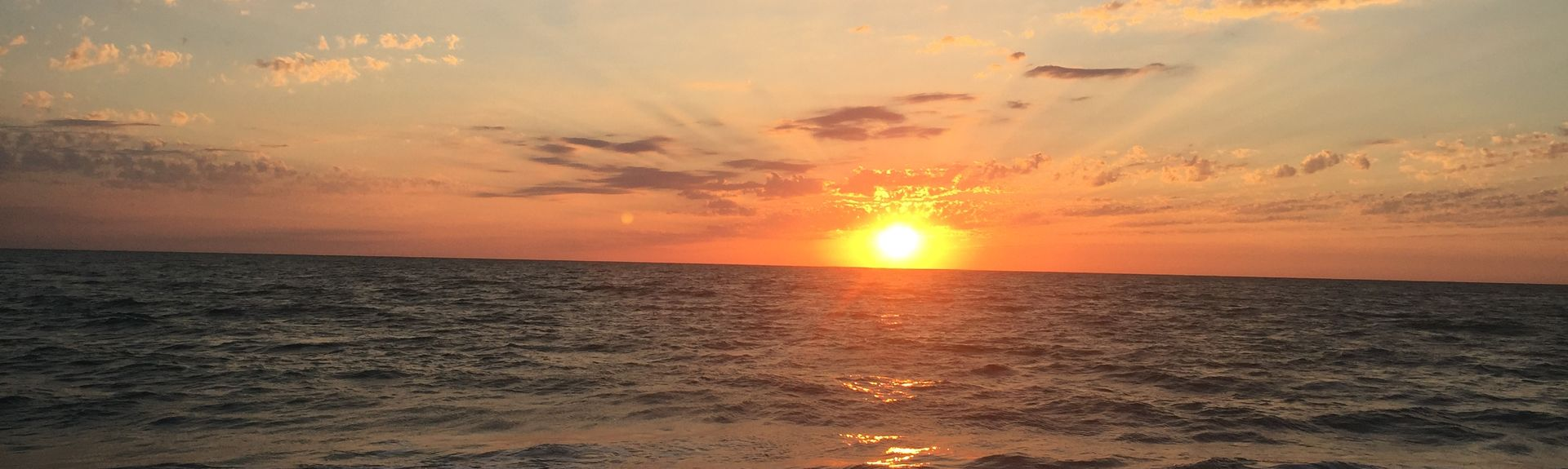 Pelican, Cape Coral, Florida, Forente Stater