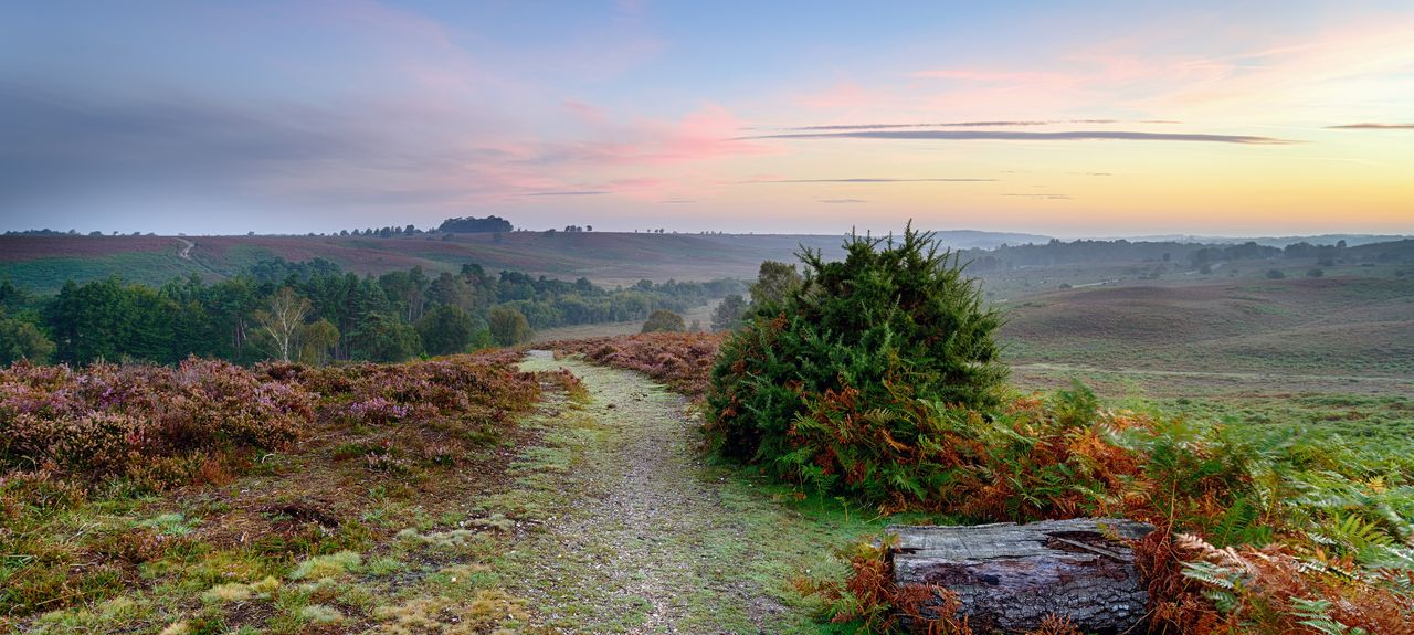 New Forest District, Hampshire, UK