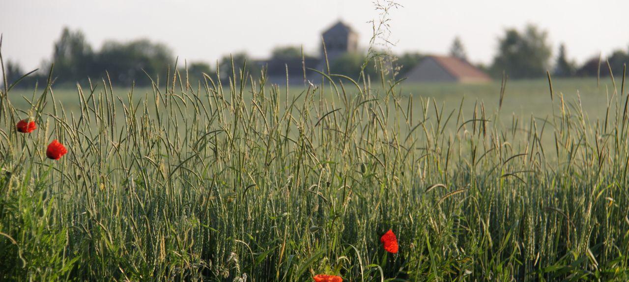 Aiserey, Bourgogne-Franche-Comté, France