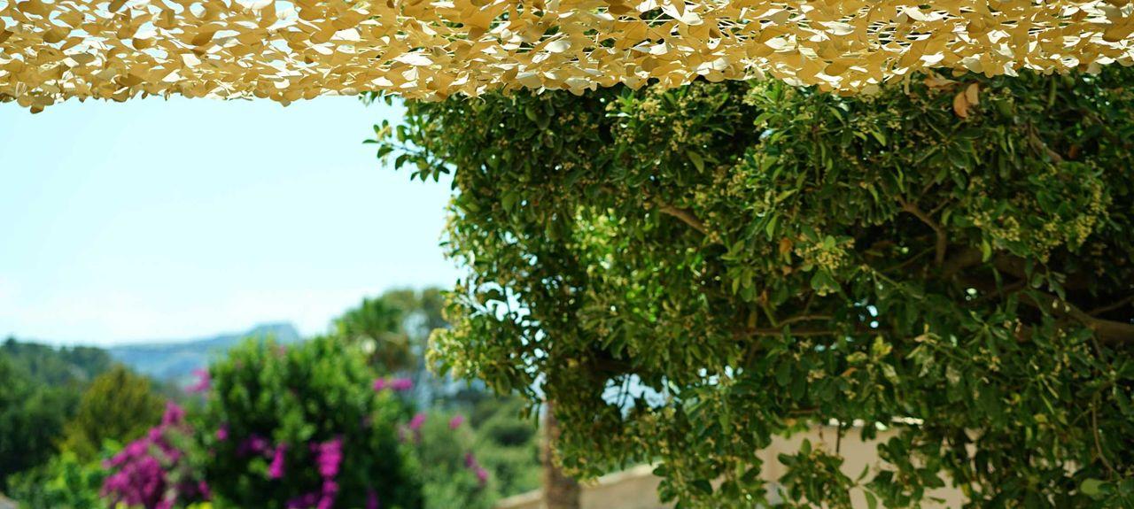 Urbanització la Font, Pollença District, Balearic Islands, Spain