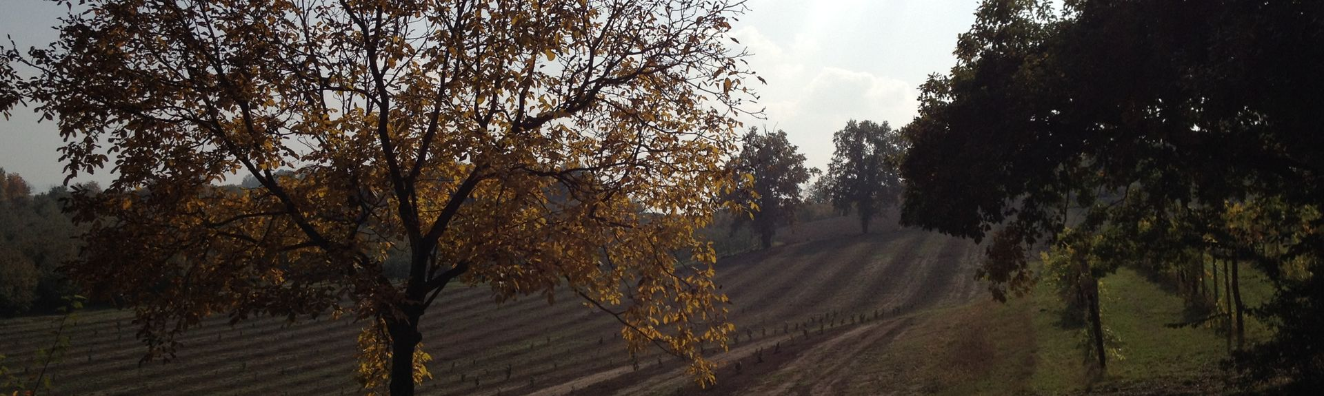 Neive, Piedmont, Italien